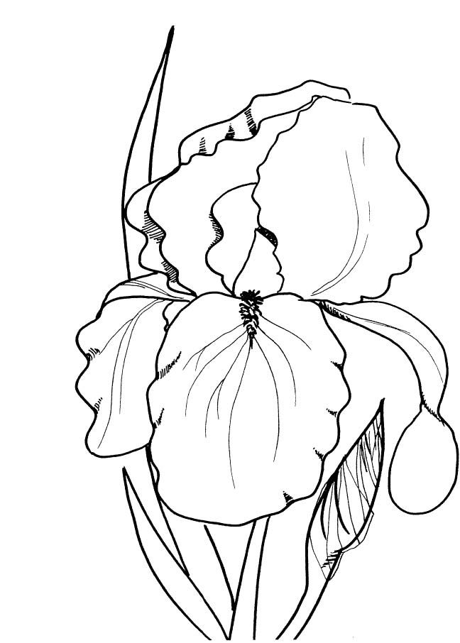 Spring Flowers Coloring Pages Print                              …