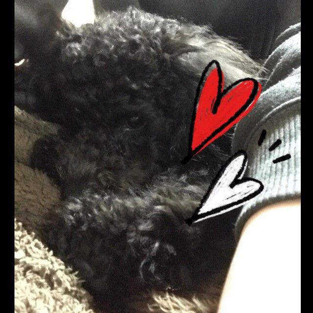 甘えっ子ちゃん꒰ ´͈ω`͈꒱💕 #toypoodle#トイプードル#といぷーどる#トイプードルブラック#といぷーどる黒#ぷーどる#ぷーどる黒#愛犬 #トイプードル女の子#pet#犬と生活#可愛い#トイプードル多頭飼い#ドッグスタグラム#dogstagram#黒い犬#黒い犬が好き#トイプードルの姿をした娘#親バカ