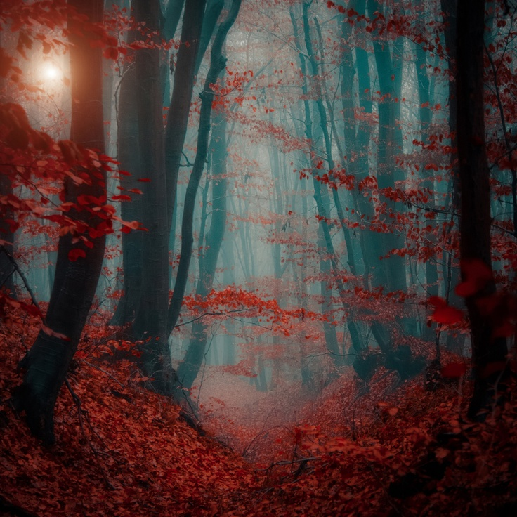 Would be a great background...Photos, Photography Ildiko, Art, Ildiko Neer, Nature Photography, Blood, Beautiful Photography, Forests Photography, Fairies Tales