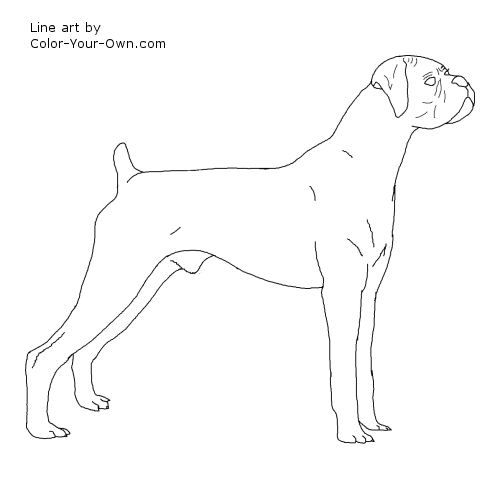 Line Drawing Of A Boxer Dog : Best coloring pages books images on pinterest