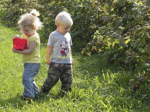 5 Organic U-Pick Farms in the U.S.Organic U Pick, Upick Farms, U Pick Farms