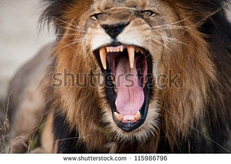 Angry Face Expression Stock Photos, Images, & Pictures | Shutterstock