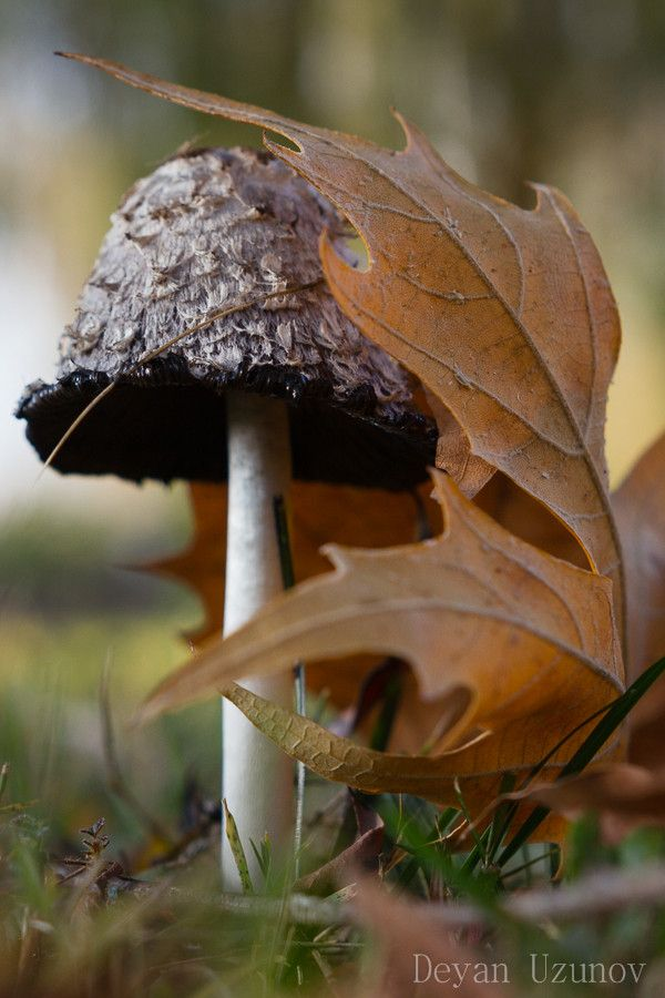 Mushroom in the Late Autumn... be careful where you step...you never know where the little people are hiding