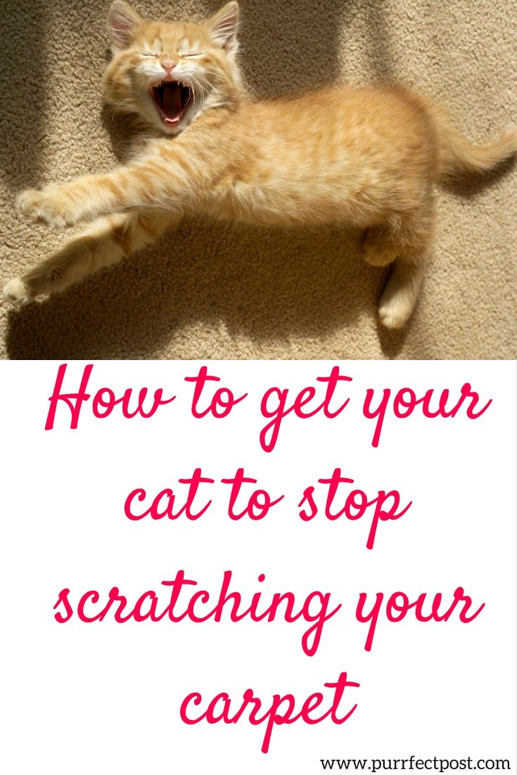 If you have appropriate cat scratching posts that your cat uses, but she is still scratching at certain bits of carpet, the reason is likely to be one of these