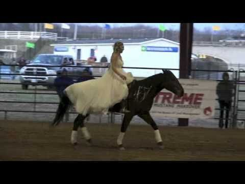 Video: Bridleless Freestyle Mustang Makeover   Stacy Westfall Horseblog 130 days of training.  She hopes to train horses full time after she graduates from Purdue.  I don't think she will have trouble getting customers, lol.  The young ladies name isMadison Shambaughand her horse is the mustang Terk. This video is fromthe VA Extreme Mustang Makeover 2015. The team was awarded Overall Reserve Champion, Fan Favorite, Rookie award, & Young Guns (18-21 yr old) award.