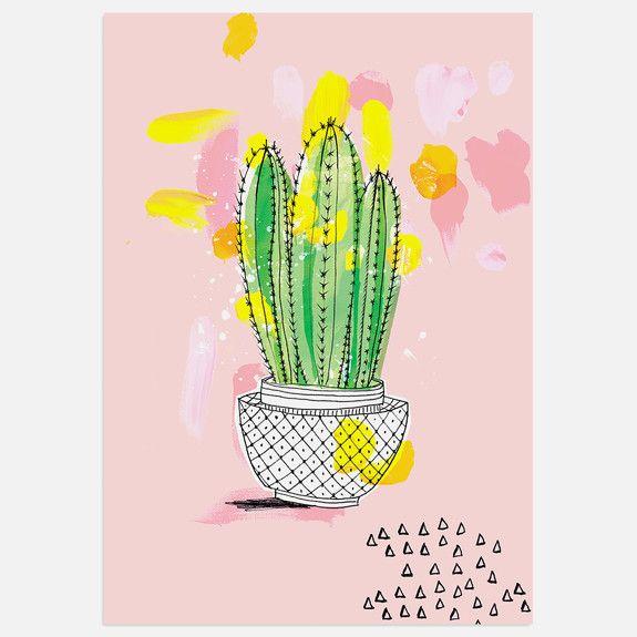 Sweet William - My Favourite Cactus