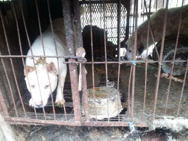 """""""O GRITO DO BICHO"""": Festival de tortura contra cães ainda mais bizarro..."""