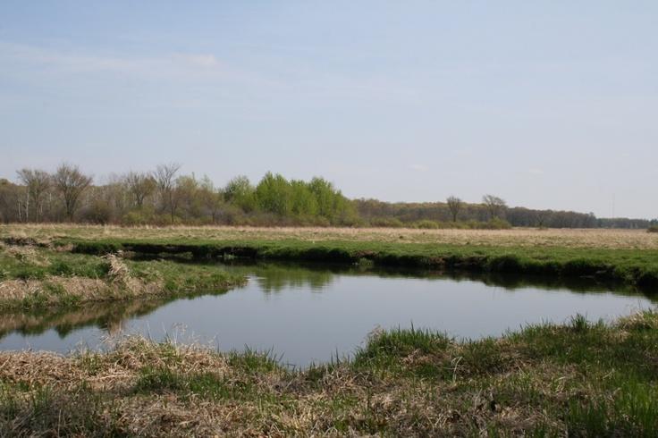 The Sunrise River near Stacy, MN