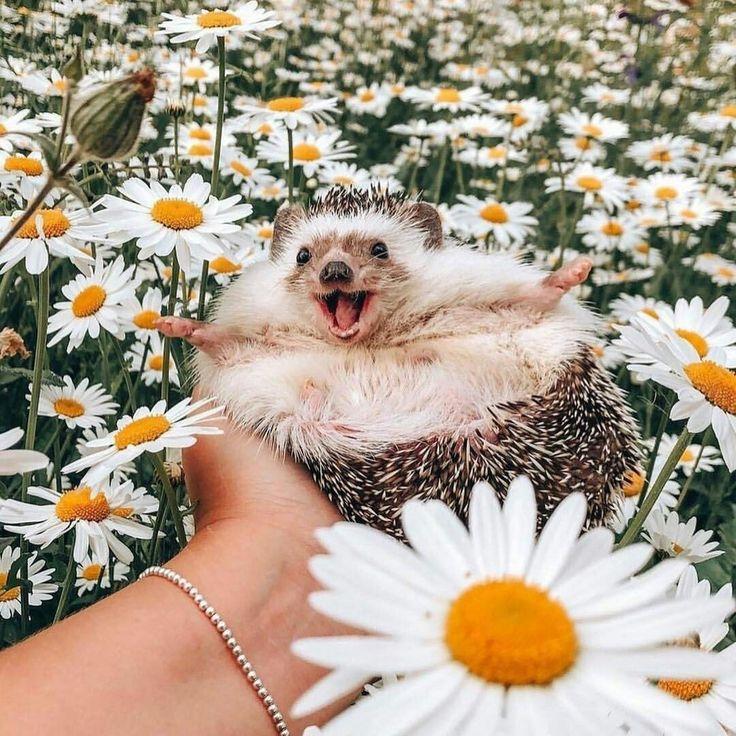 лучшие фото животные улыбаются заказать прохладительные напитки