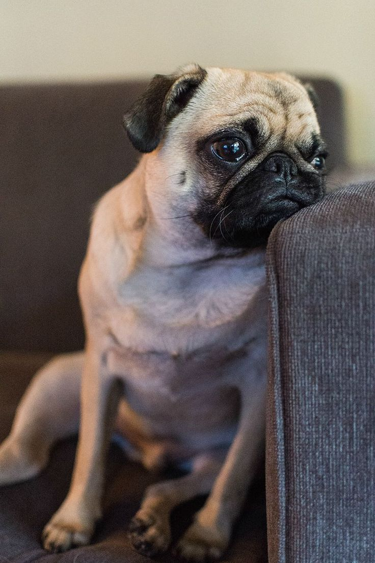 Why won't my human bring me food to eat while on the couch??