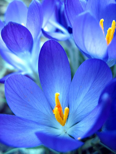Bright Blue Color Blocking On One Wall And Ceiling: ~~blue Flower ~ Crocus By Slowitdown~~
