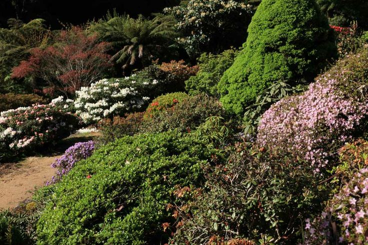 Rockery with R. serpyllifolium on right covered in tiny pink flowers