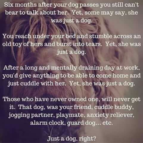 ♡☆ Just a Dog, right? ☆♡ - Right - over a year that Z left - words don't describe.