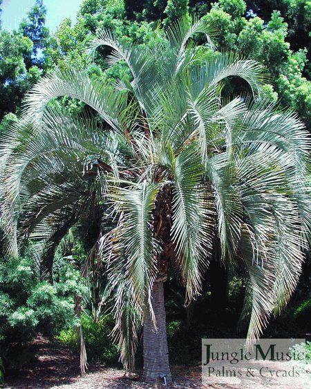 Die besten 25+ Tropischer garten Ideen auf Pinterest Tropischer - tropische pflanzen im garten