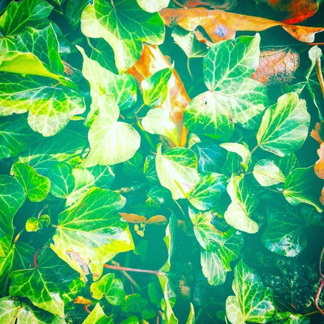#popart#art#modernart#abstraction #abstract#abstractef#green#nature  artwork by Charles Bridge 7x