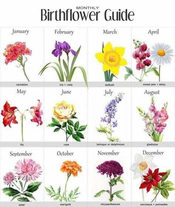 Birthflower Guide Birth Flowers Birth Month Flowers Month Flowers
