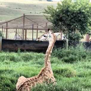 Lions Park, Johannesburg