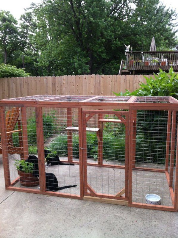 outside cat enclosure   Liz Stanley   all galleries >> Cats > Outdoor cat enclosure