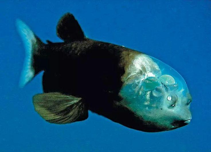 Ungewöhnlich Monterey Bay Aquarium Malvorlagen Fotos ...