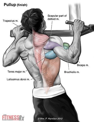Muscle use by Assisted pull up