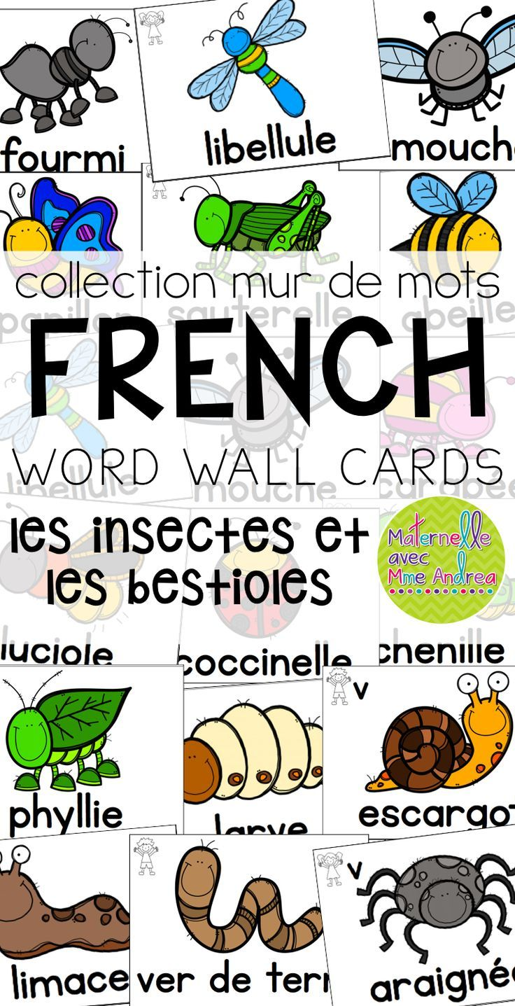 Collection mur de mots | FRENCH Bugs & Insects word wall cards | les insectes et les bestioles | vocabulaire | maternelle