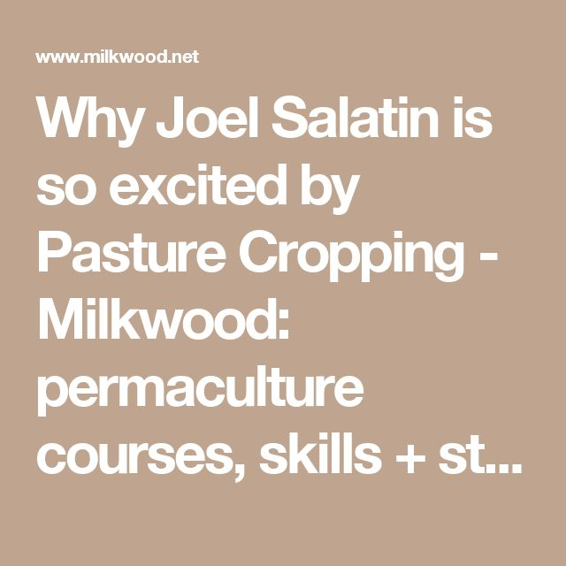 Why Joel Salatin is so excited by Pasture Cropping - Milkwood: permaculture courses, skills + stories