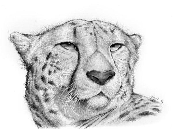Cheetah Art Print By Greg Joens In 2020 Cheetah Drawing Big Cats Art Leopard Sketch