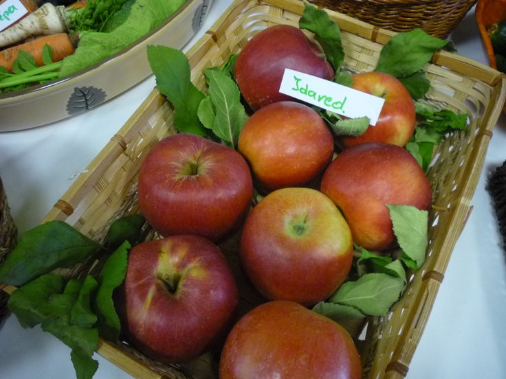 """Bár jellemzően már nyár elejétől érnek hazánkban a gyümölcstermő növények termései, az alma és körte szürete """"csak"""" augusztustól indul el. Mint tudjuk, napi egy alma az orvost távol tartja. A leszedett almák egészségére azonban nekünk kell vigyázni!  http://kertlap.hu/egeszseges-alma/"""