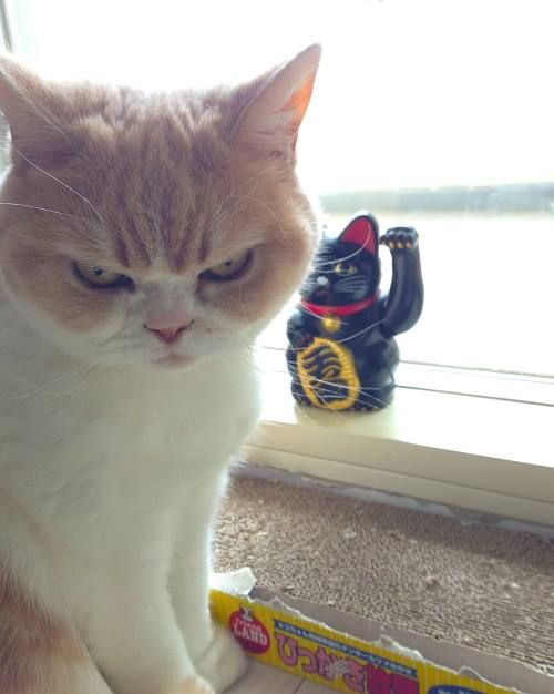 Koyuki the Newest Grumpy Cat Throws Shade In Instagram Photos