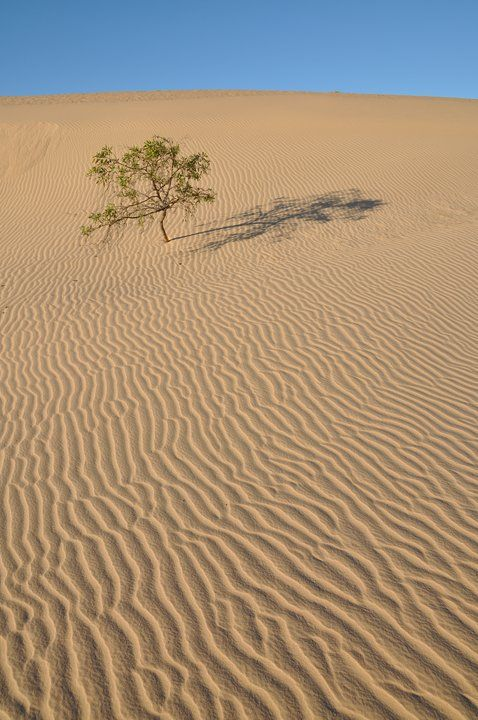 The dunes of the Mungo National Park, New South Wales, Australia.