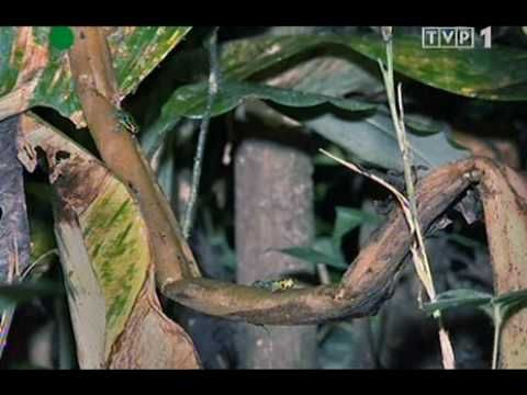 BBC Życie gadów i płazów cz 2 4