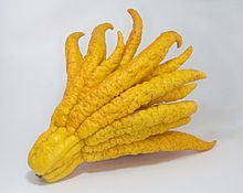 Fingered citron. Zest for tea, etc. Chinese New Year [Rooster]. Buddhas hand 1.jpg