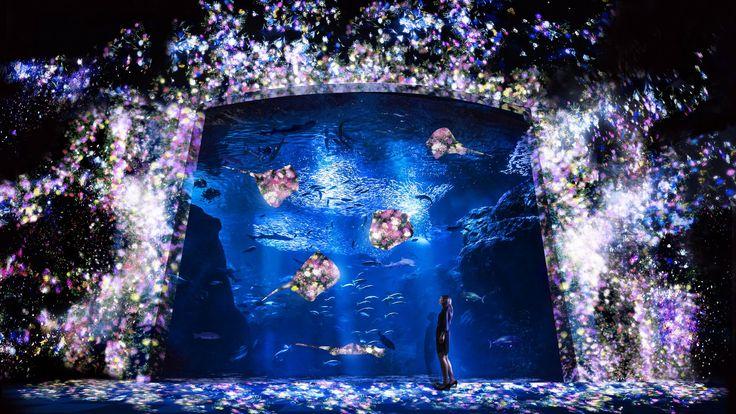 新江ノ島水族館の相模湾大水槽に投影されるプロジェクションマッピング作品。たくさんの魚で満たされた巨大な水槽にプロジェクタによる映像が投影され、花々が咲き渡るアート空間となる。プロジェクションの光は、水槽照明よりさらに弱いものだが、映像そのものが水槽照明に代わるやさしい光となって空間を照らす。大水槽の周りの花々は、魚が近くを横切ると、いっせいに散っていく。作品は、あらかじめ記録された映像を再生しているわけではなく、魚たちの動きに影響を受けながら、永遠と変容し続け、鑑賞者が目撃する瞬間の絵は、二度と見ることができない。