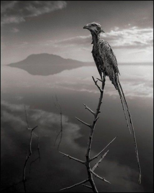 Lake Natron animals   The Lake That Turns Animals That Touch It Into Statue-Like Creatures ...