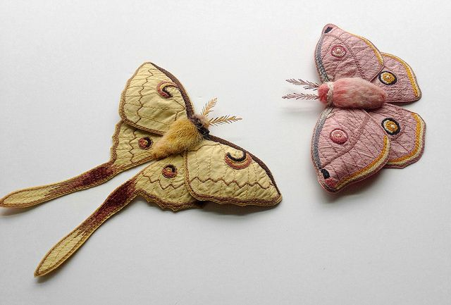 Textile moths by Betsie Withey