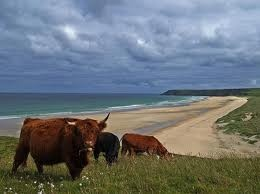 Scotland Cattle. Isle of Lewis, Scotland