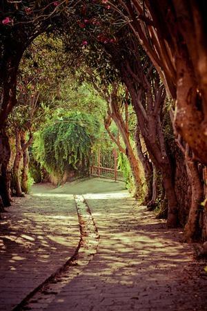 visitheworld:    Oleander lane in the ancient city of Byblos,...