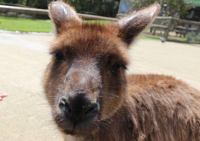 Ballarat Wildlife Park: Marsupial Madness!