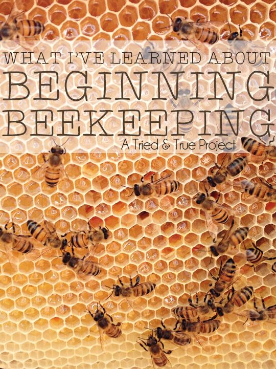 What I've Learned About Beginning Beekeeping - I'd like to have my own bees at some point. Seems like a fun hobby.