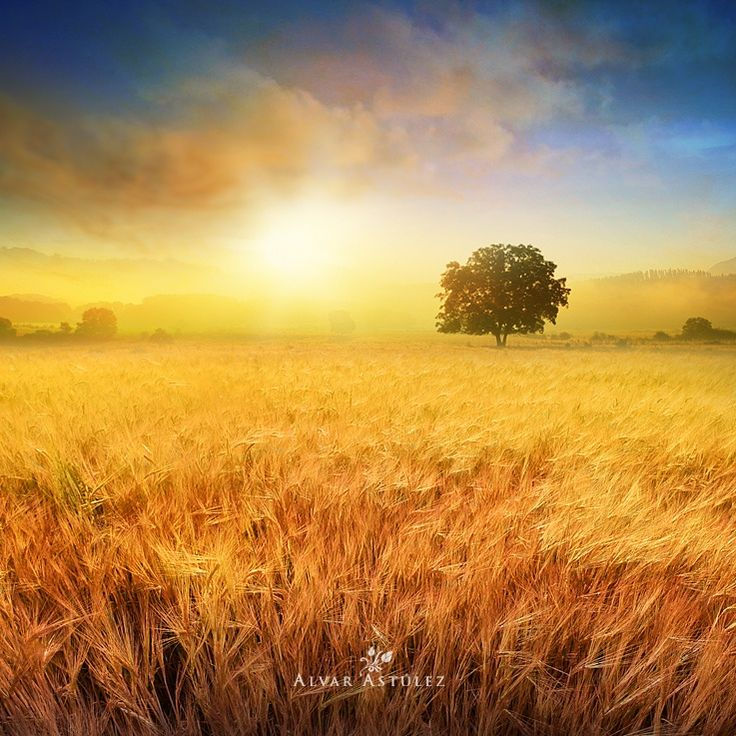 The field in summer  by Alvar Astúlez on 500px