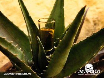 #antrosdemexico Diviértete y conoce más del mezcal en La Katrina de Acapulco. ANTROS DE MÉXICO. Si quieres saber más del mezcal porque es tu bebida preferida, durante tus próximas vacaciones en Acapulco debes visitar La Katrina, una mezcalería donde conocerás más de esta bebida y podrás degustar varios tipos. Obtén más información en la página oficial de Fidetur Acapulco.