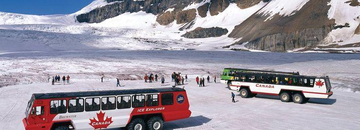 Glacier Adventure Experience | Brewster Travel Canada