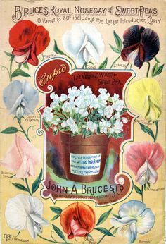 vintage seed packet images in public domain | Seed Catalogs from Smithsonian Institution Libraries