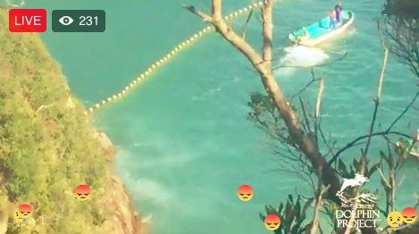 (308) Twitter Risso's dolphins have been driven into #TheCove. Watch LIVE by visiting our Facebook page @ Ric O'Barry's Dolphin Project #DolphinProject