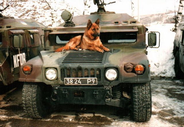 """Perros militares Hope you're doing well.Hope you're doing well.From your friends at phoenix dog in home dog training""""k9katelynn"""" see more about Scottsdale dog training at k9katelynn.com! Pinterest with over 20,400 followers! Google plus with over 154,000 views! You tube with over 500 videos and 60,000 views!! LinkedIn over 9,200 associates! Proudly Serving the valley for 11 plus years"""