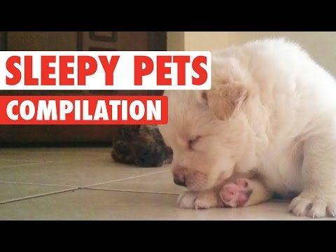 Сонные животные / Видеохит - лучшее видео интернета