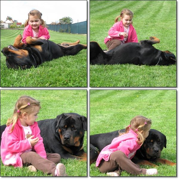Everybody Said What Are You Going To Do With Your Rott When Have Kids I Let Him Babysit Like Duhhhh