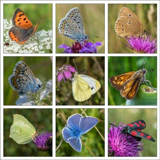 Vlinder collage.