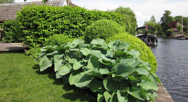 Rodenburg Tuinen: villatuin aan de Loosdrechtse plassen. De voortuin van deze villa is jaarrond aantrekkelijk en groen door de buxusvormen. De tuin past bij de omgeving en vindt een mooie combinatie tussen de villa en het waterleven.