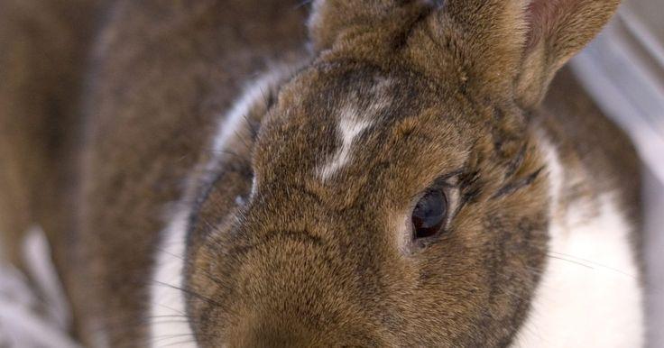 Como fazer uma gaiola de coelho de madeira e tela de arame. As pessoas criam coelhos como animais de estimação, para lucro e para obter sua carne e pele. Independentemente do uso final, eles necessitam de um espaço confinado, que proporcione abrigo, lugar adequado para dormir, privacidade, alimento e água. Esses espaços são as gaiolas para coelhos. Uma de 75 cm x 75 cm x 1,2 m é suficiente para até mesmo o ...